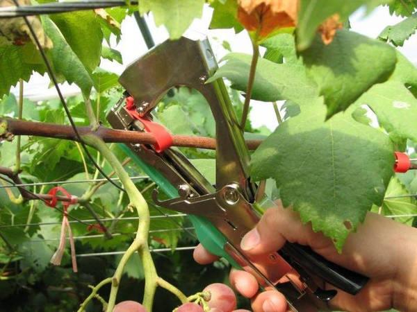 Aparat legat via, legume, pomi, Heinner